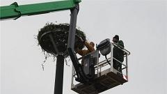 In etwa zehn Metern Höhe wurde das Storchennest auf dem Mast angebracht.©Verlag die Harke
