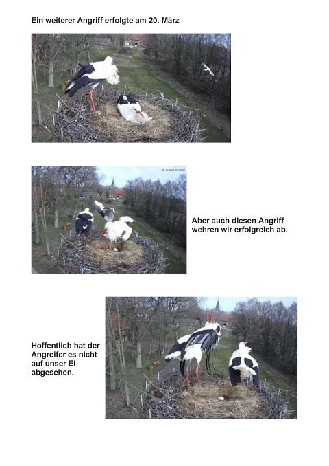 Seite 11 Storchentagebuch©Heimatverein Holtorf