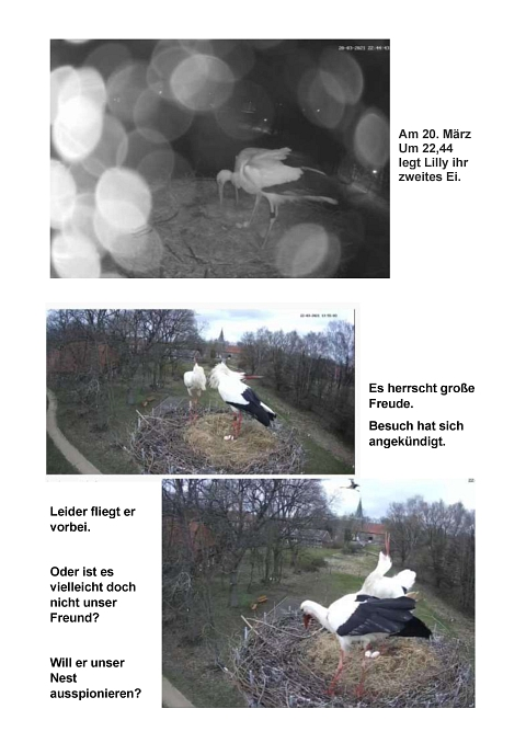 Seite 12 Storchentagebuch©Heimatverein Holtorf