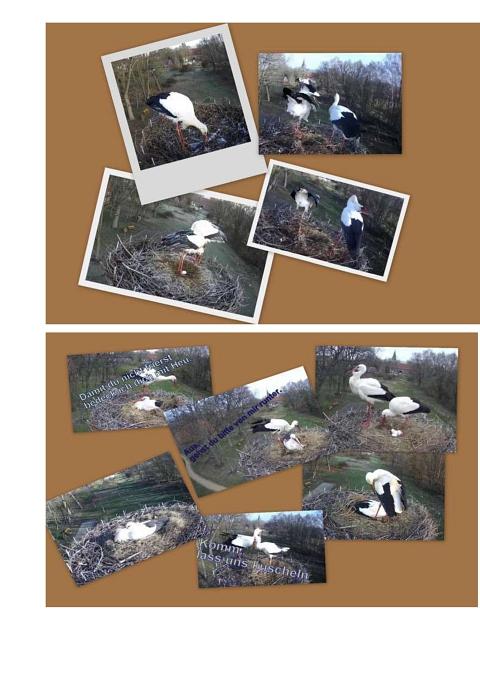 Seite 20 Storchentagebuch©Heimatverein Holtorf