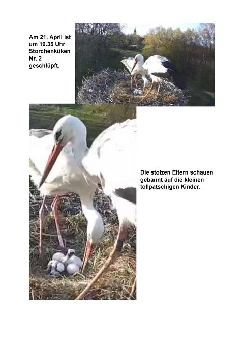 Seite 24 Storchentagebuch©Heimatverein Holtorf