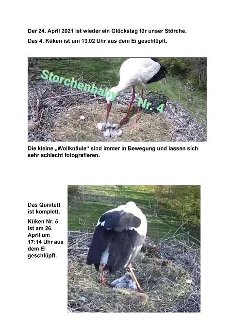 Seite 26 Storchentagebuch©Heimatverein Holtorf