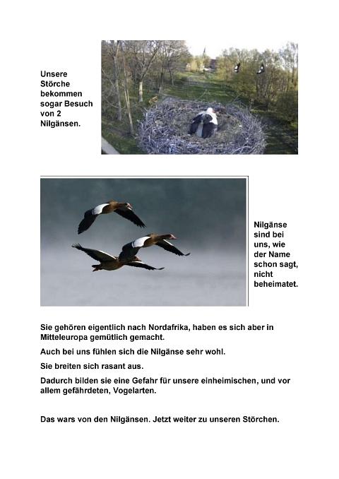 Seite 27 Storchentagebuch©Heimatverein Holtorf