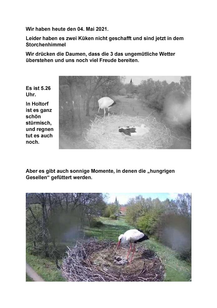 Seite 28 Storchentagebuch©Heimatverein Holtorf