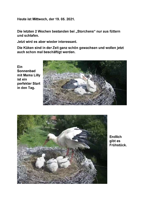 Seite 30 Storchentagebuch©Heimatverein Holtorf